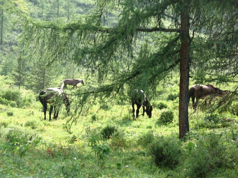 Лошади отдыхают