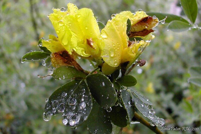 Цветы под дождём фото
