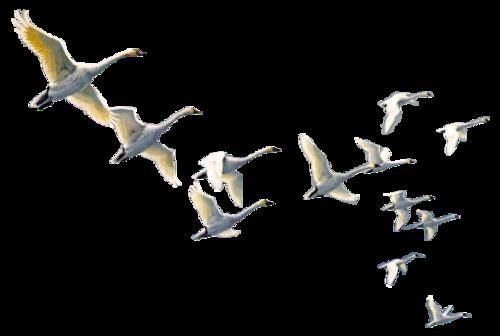 Ptice..... 0_780d3_d3a794a0_L