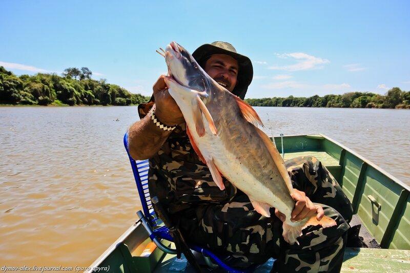 крокодильчик рыбалка