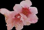 printemps pastel
