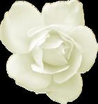 tp-rose5.png