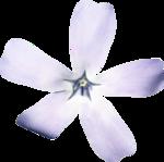 SD DM FLOWER 1.png