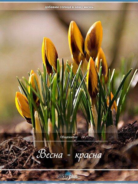 Весенние цветы 01