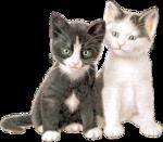 Кошки 5 0_57c52_c4d2eb30_S