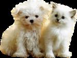 Собаки  0_57c8b_143f342c_S