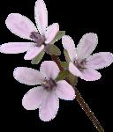 JanetB_HopesnDreams_flower3.png