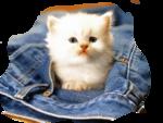Кошки 5 0_50a1b_2c5c23e9_S
