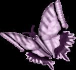 бабочки 0_50e80_ef201c40_S