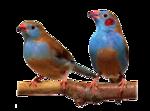 Птицы  разные  0_51ca0_31f5fe0f_S