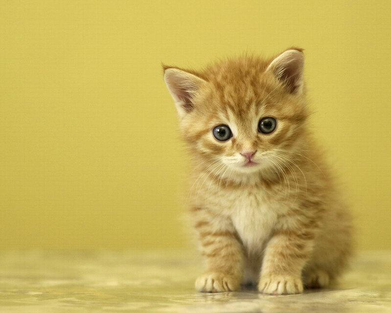 Кошки  0_52943_9d13174f_XL