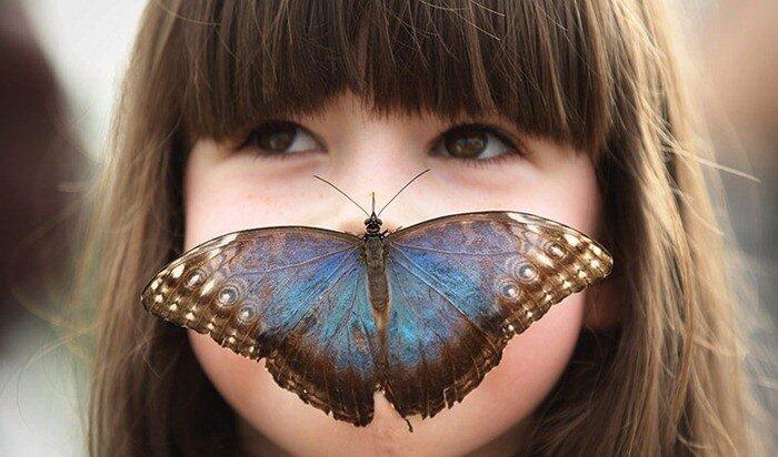 бабочки тропические фото
