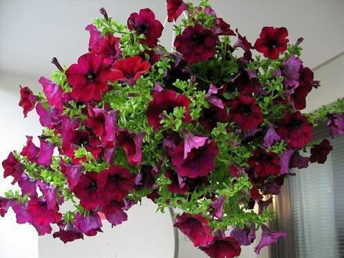 Ландшафтный дизайн, цветоводство и флористика на сайте -
