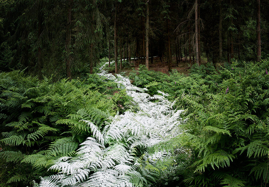 Into the woods, Ellie Davies80.jpg