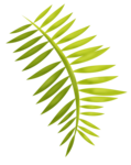 LaurieAnnHGD_PalmBranch1.png
