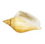 Mystique PF painted shell 2.png