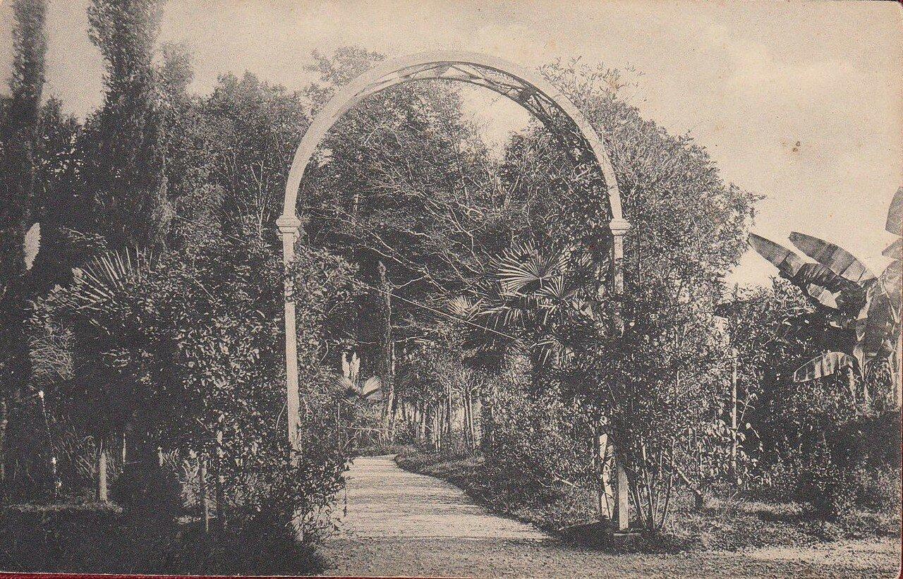 Тропические растения в Ермоловском парке