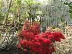 Парк Ashikaga Flower