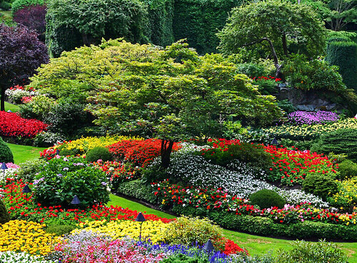 Самые красивые цветники — фото