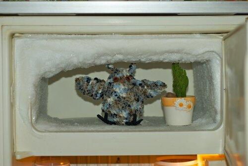 На фото — сова и её кактус находятся в морозилке, с снегах и льдах