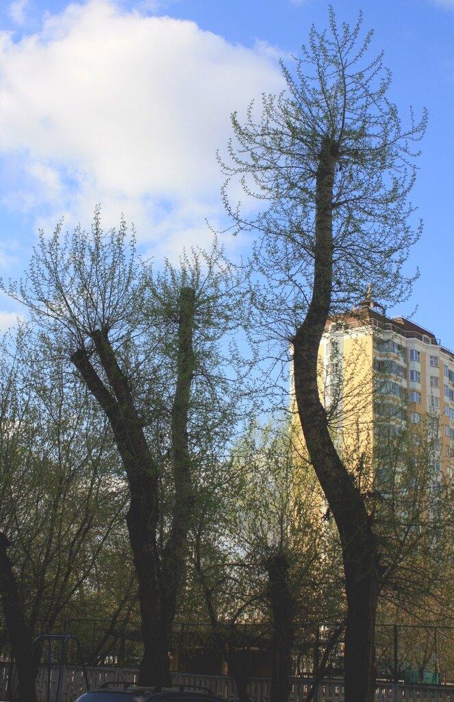 Москва, Лефортово, 1 мая 2011