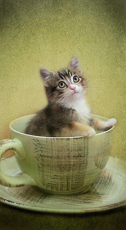 Кошки Кимберли Палмер