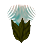 WP_HW_SPIKEYFLOWER.png