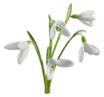 Snowdrops_Snowdrops1_Scrap and Tubes.png
