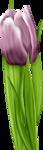 «lrbunnyhope»  0_56c1f_14d54cdf_S