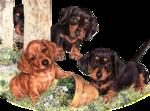 Собаки  0_57c76_901f3a9c_S