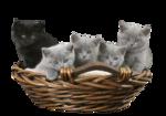 Кошки 5 0_50a13_deeb866f_S