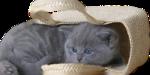 Кошки 5 0_50a14_6bff650a_S