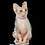 Кошки 5 0_50a22_cf18a99b_S