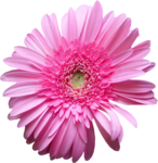tw_flowers63.png