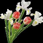 Орхидеи 9