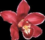 Орхидеи 27