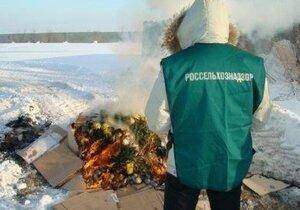 В Приморье уничтожено несколько партий заражённых импортных цветов
