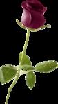 DBS_Rose.png