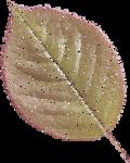 NLD Leaf tulle 4.png