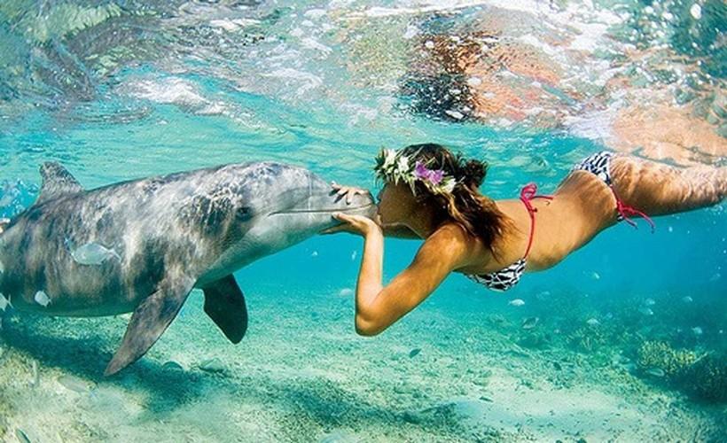 Беременная женщина и дельфин акушер 0 12e236 cc4ccbb orig