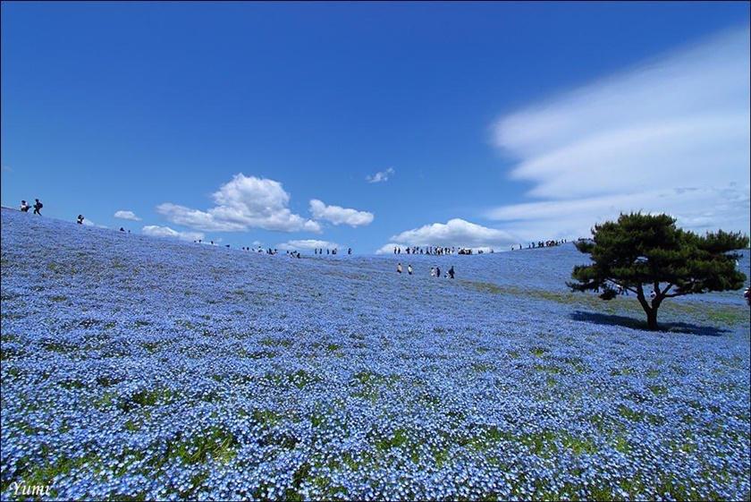 Живописный японский парк Хитати Кайхин 0 1422bd d4051277 orig
