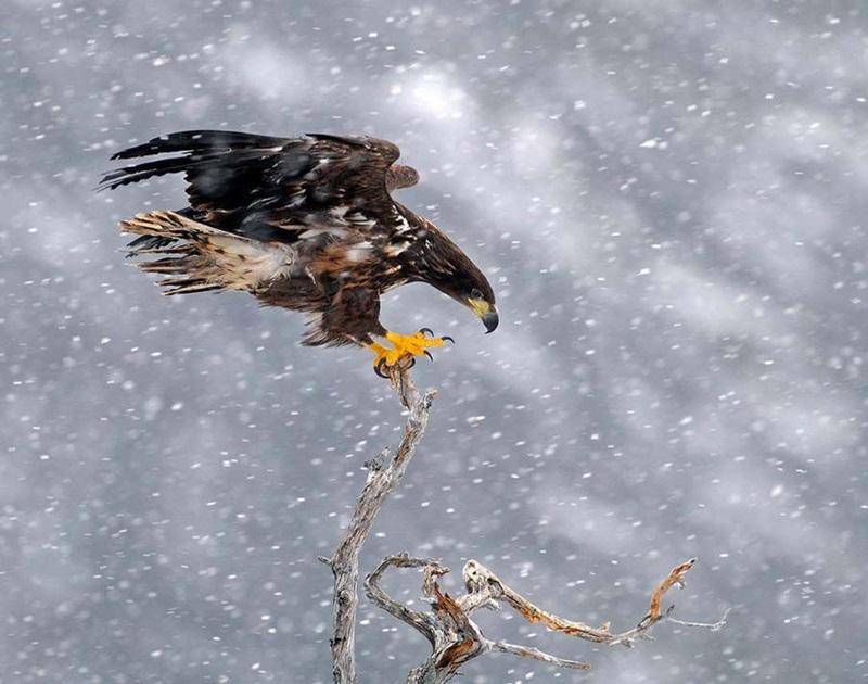 Красивые фотографии природы Норвегии разных авторов 0 ff0db 20aa6afa orig