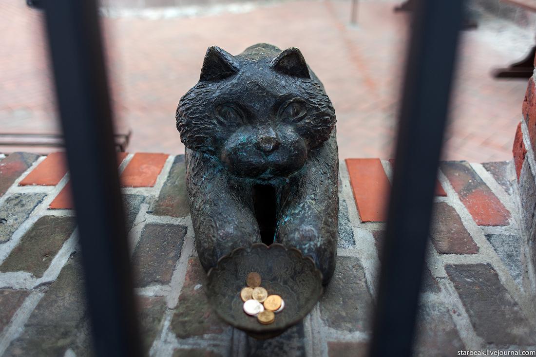 Коты символы в калининграде