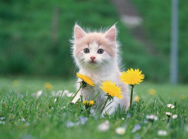 Kitten outdoors in spring meadow