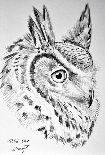 Раскраски Птицы  Картинкираскраски для детей и взрослых