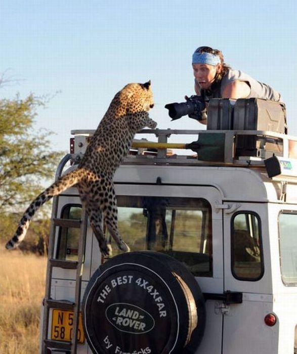 испугался леопарда