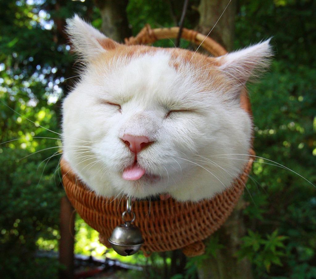 этом самые прикольные коты в мире фото ролике видно, как