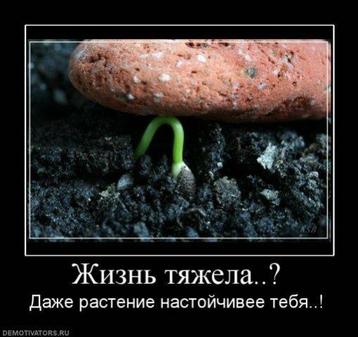 Демотиваторы :) 0_65390_ec38383d_XL
