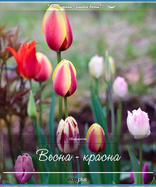 Весенние цветы 06