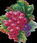 Виноград  0_66339_3d3c3586_S